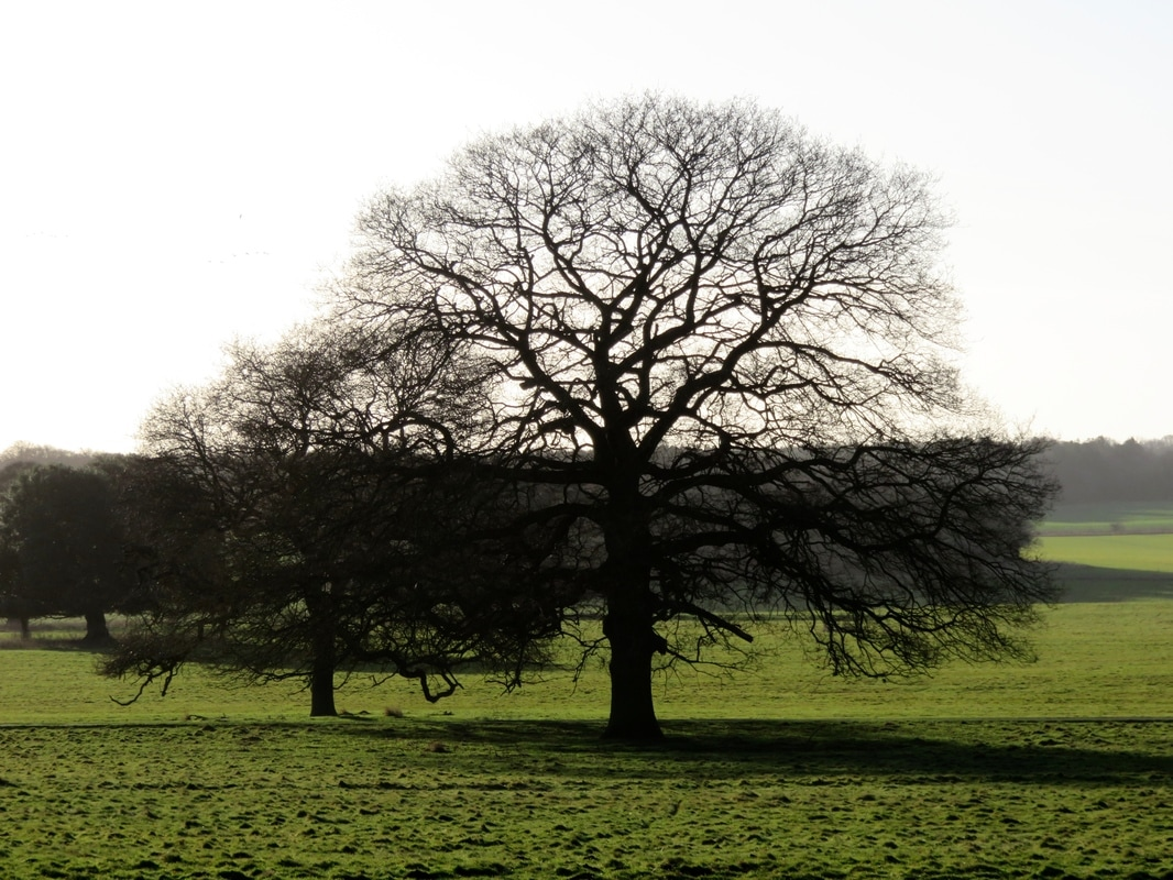 bare trees in silhouette