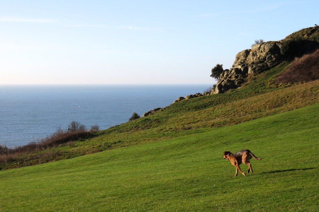 dog on grass, sea in background