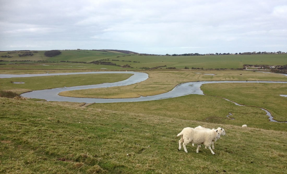 Sheep and meanders