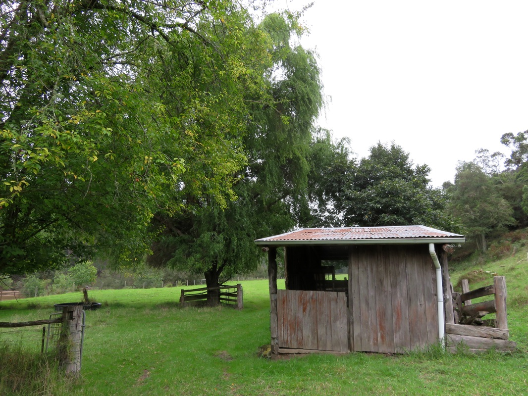Small timber shed, field and large trees