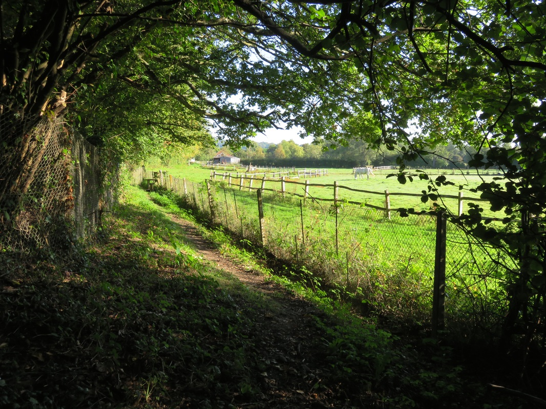 Footpath beneath green trees, beside fields