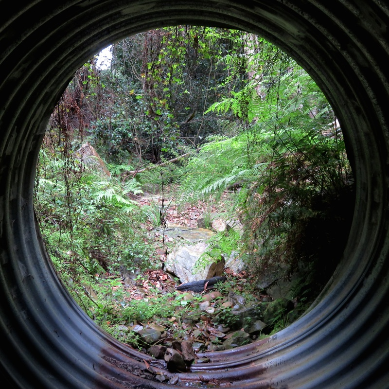 Looking out from inside the culvert