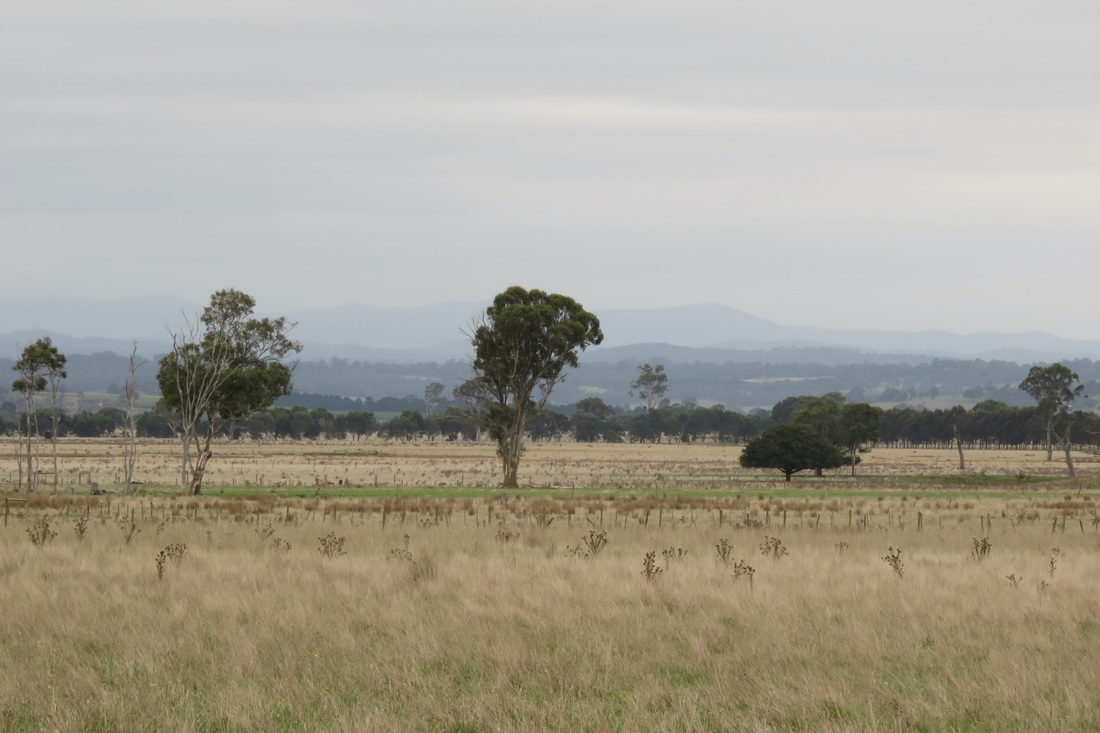 Paddocks and distant hills