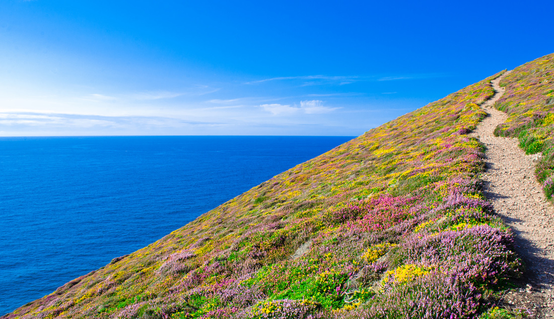 Colourful heather, blue sea and sky