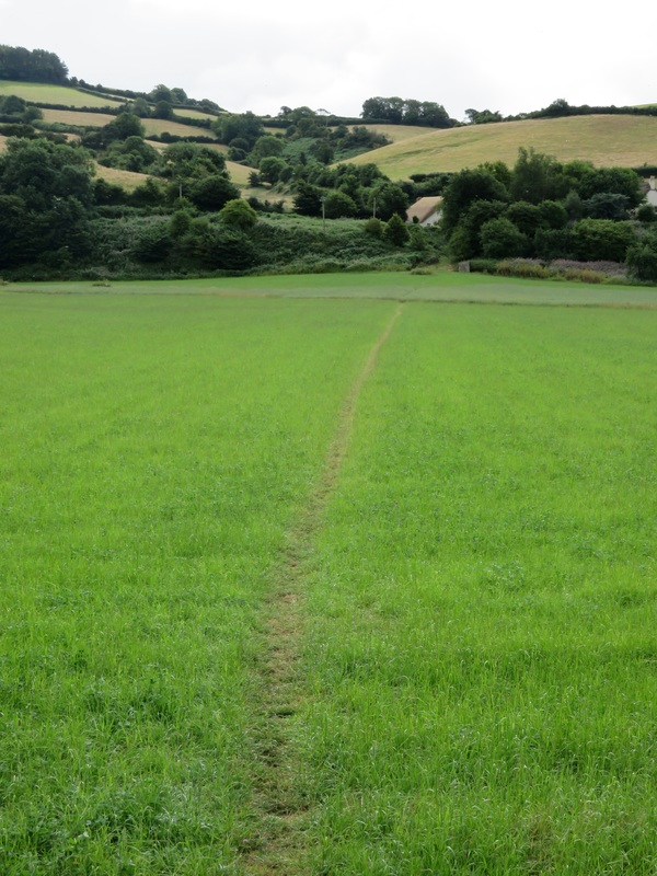 path on field