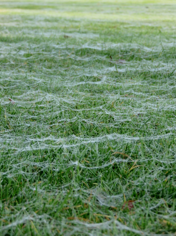 Webs on the grass