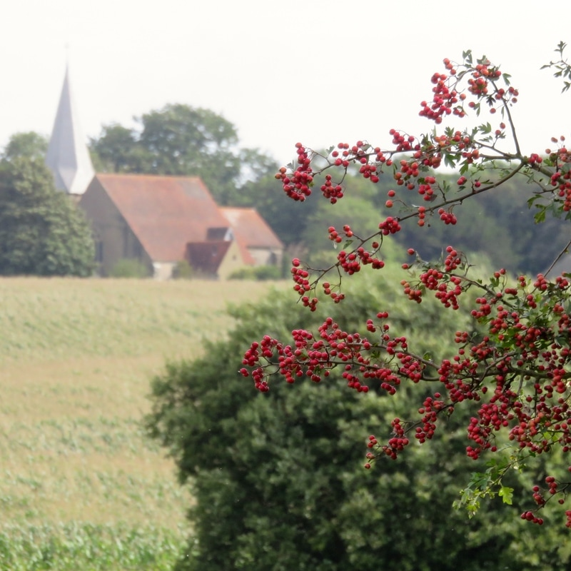 Church and haws