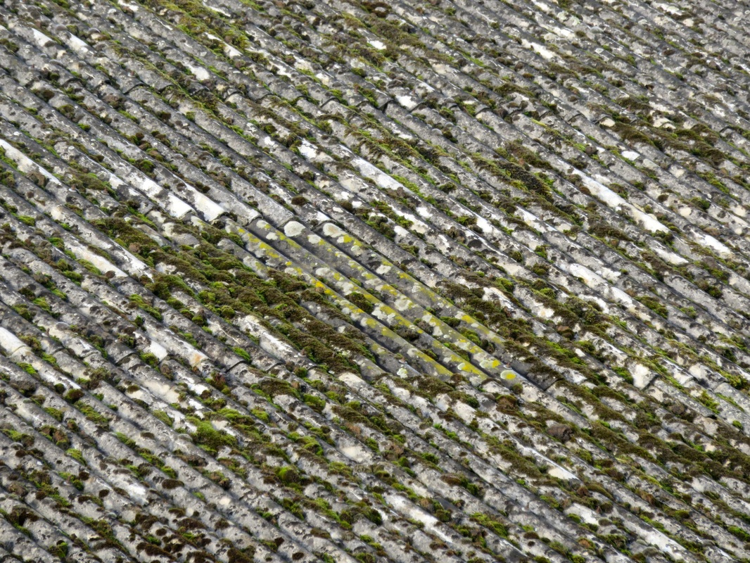 corrugated roof with moss