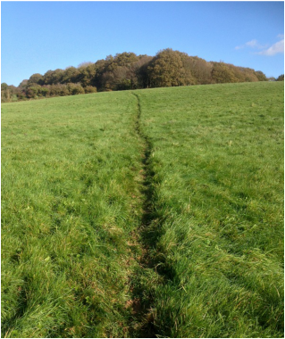 Footpath through field