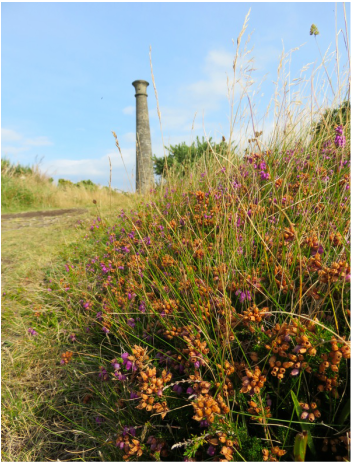 Wellington Monument and heather