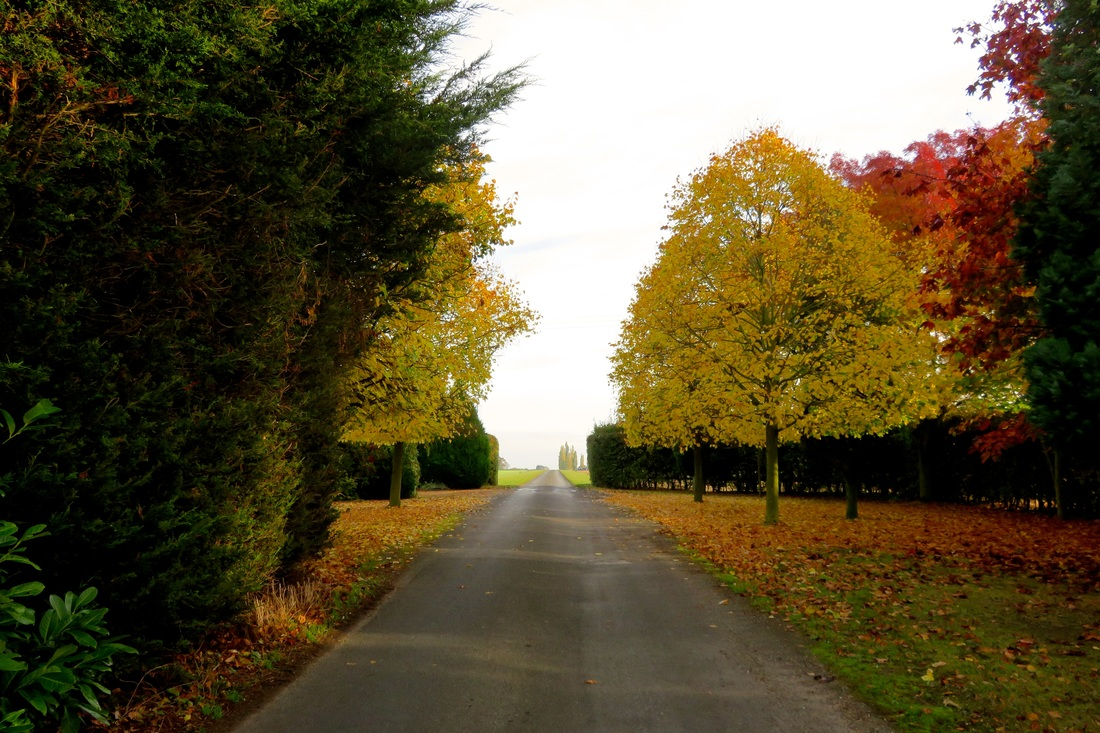 Straight road and glowing autumn trees