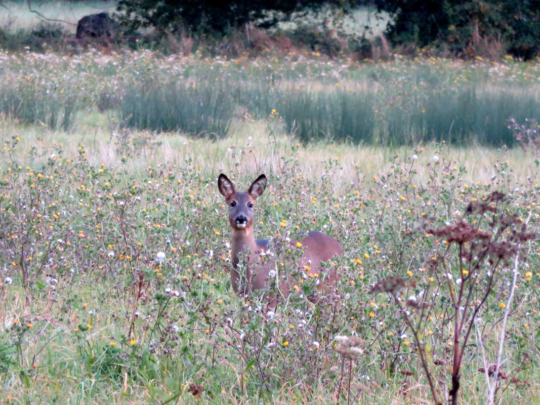 Deer among wildflowers and weeds