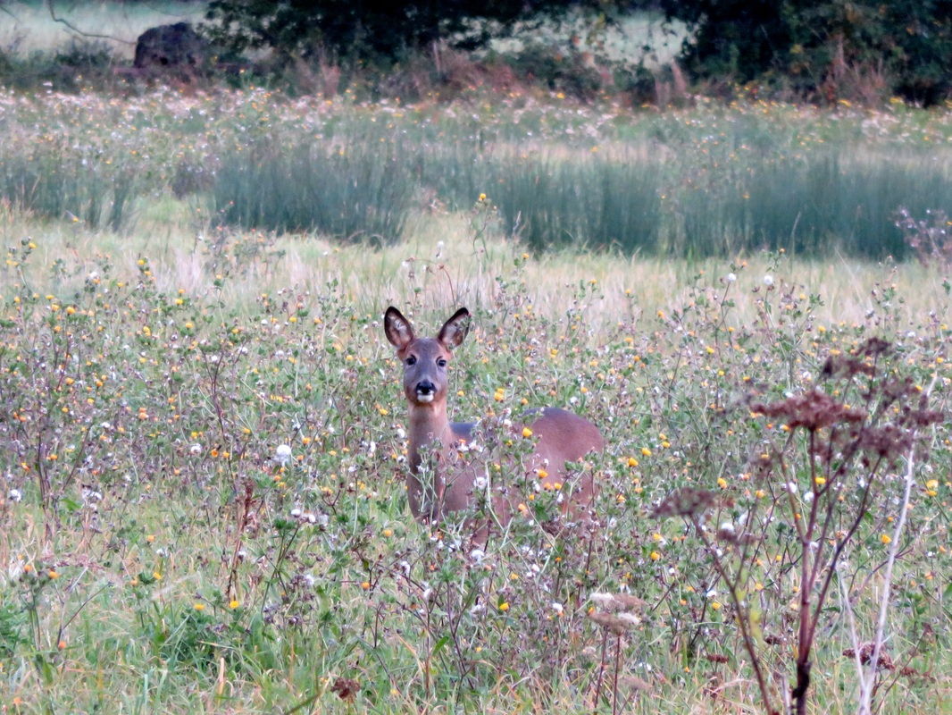 deer and wild flowers