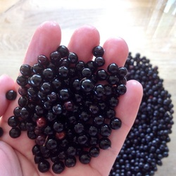 Elderberries in hand