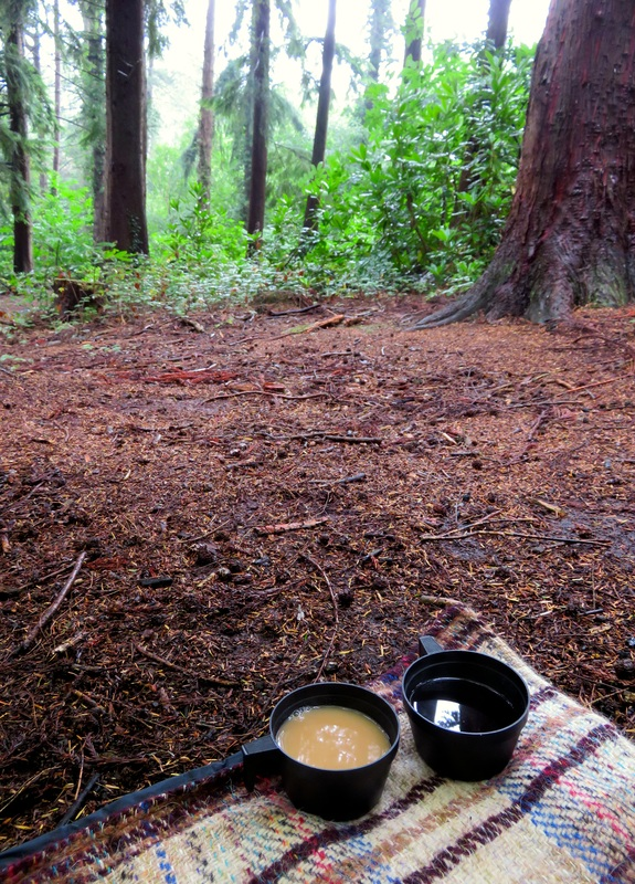 Tea in the woods