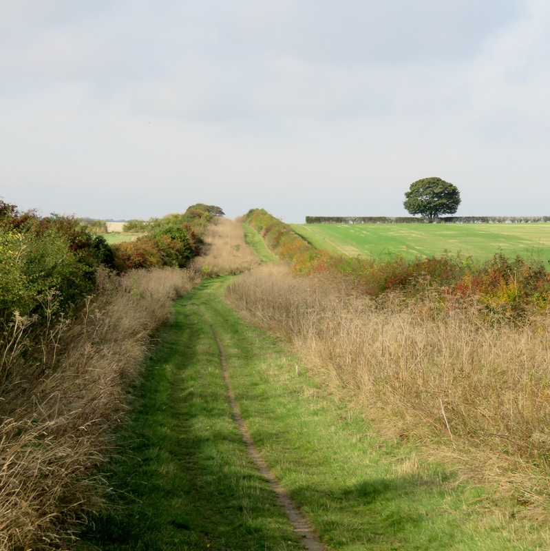 green road between hedges and fields
