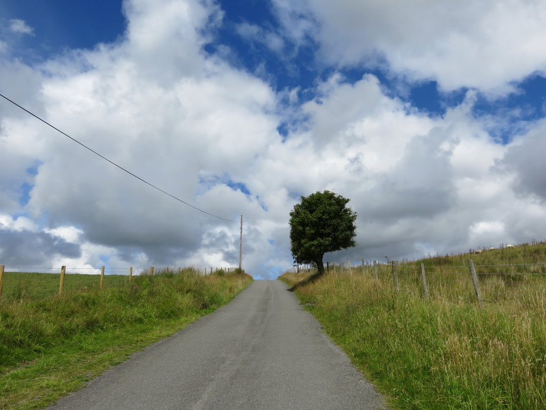 Road to Nant-y-Moch
