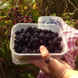 Blackberries in a tub
