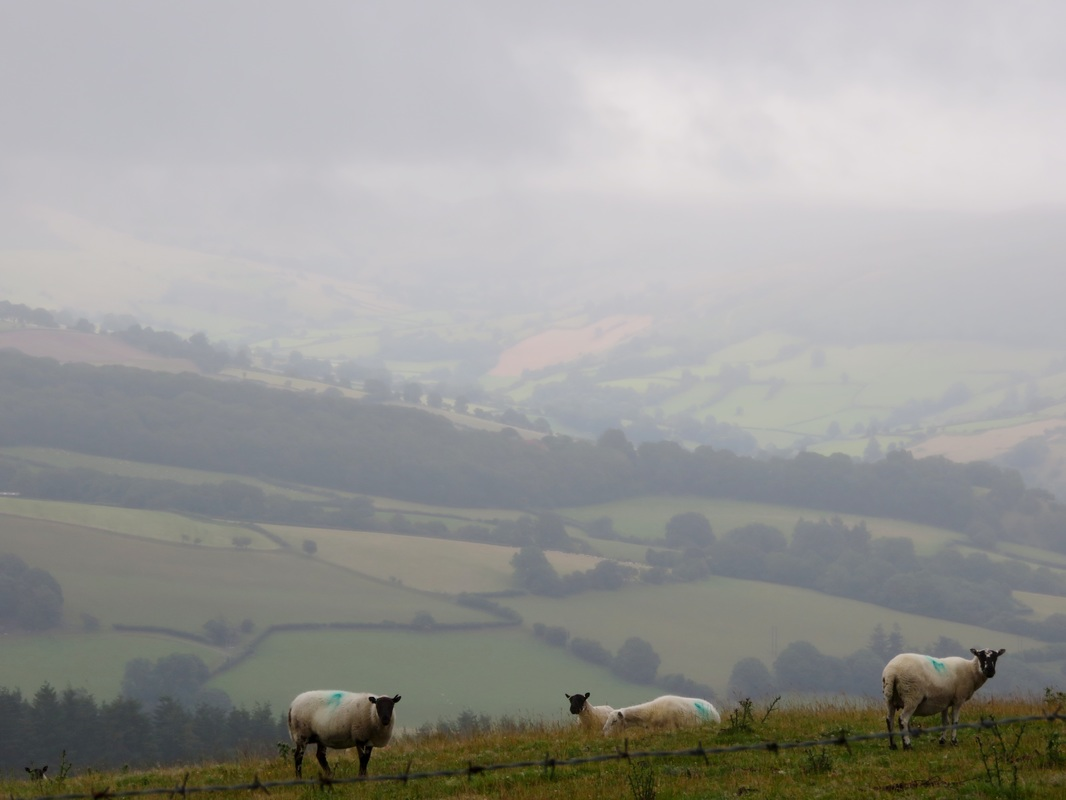 Sheep and cloudy view