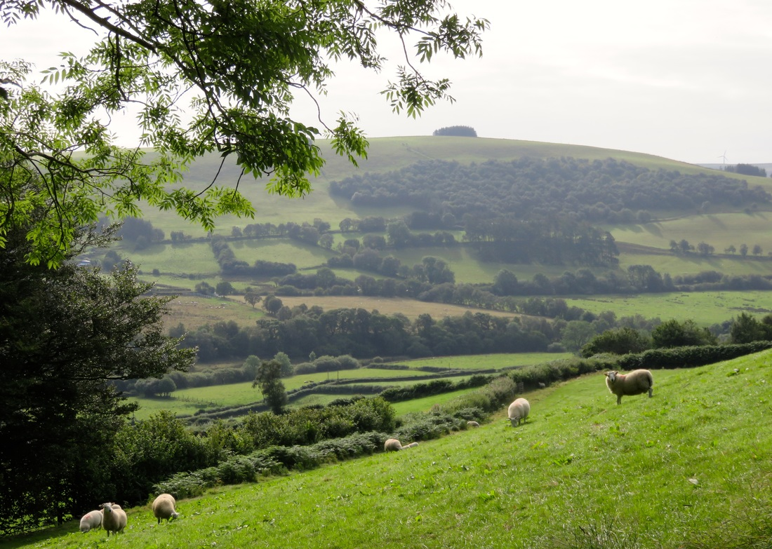 Hills, grass, sheep