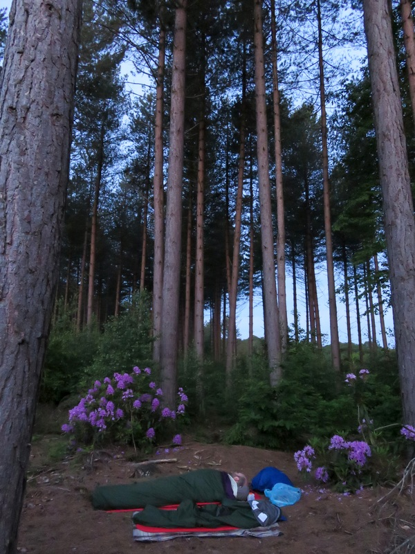 Tall pines and bivvy bags