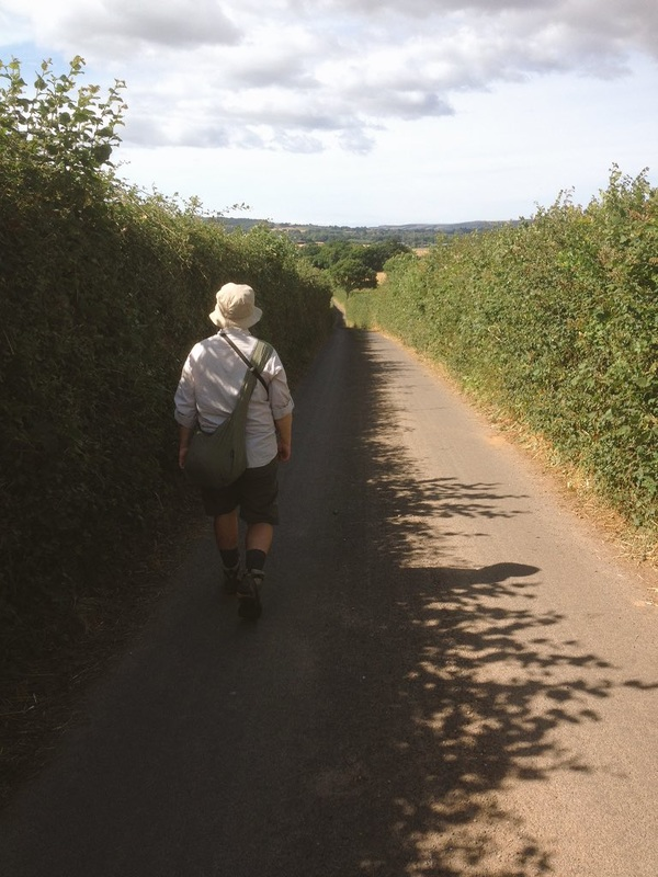 person walking on road between hedges