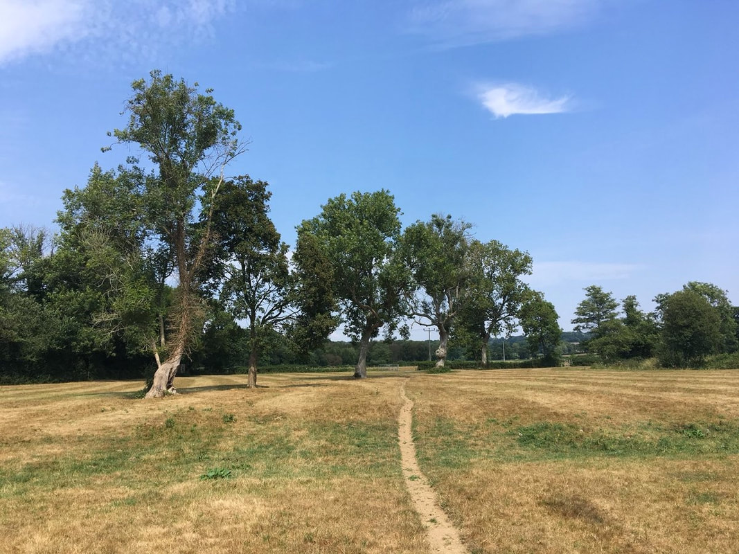 Path through dry field
