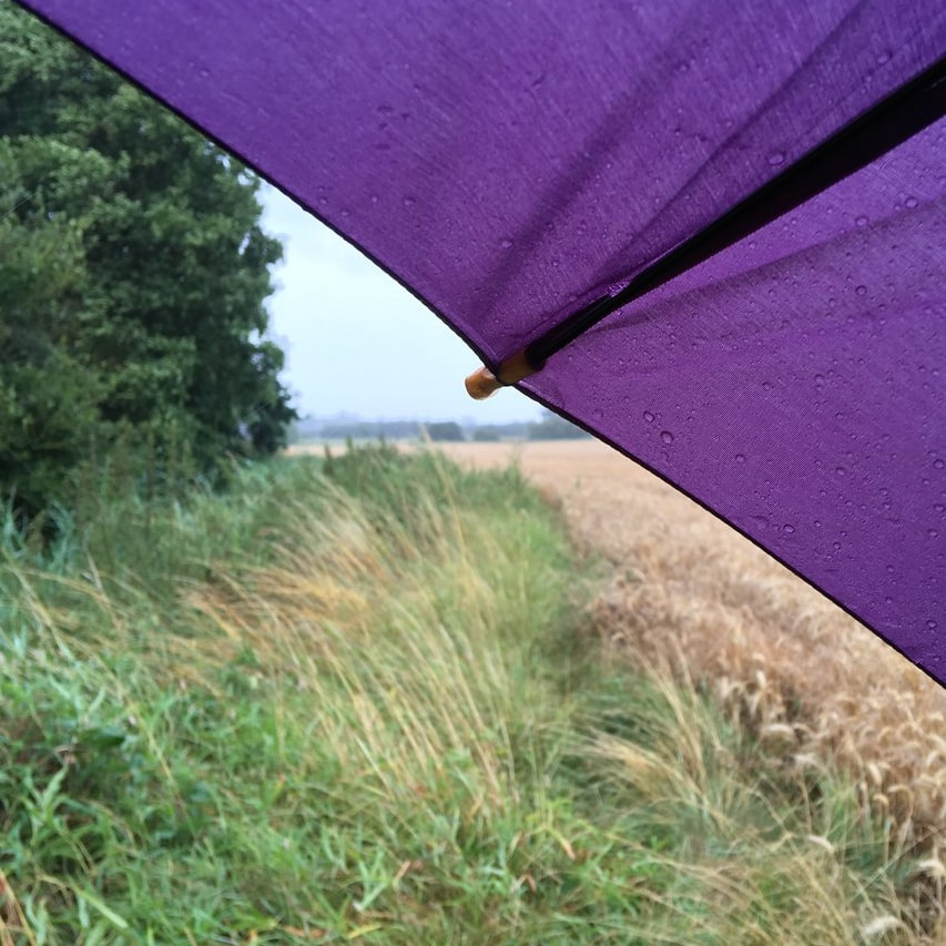 Wheat field from under purple umbrella