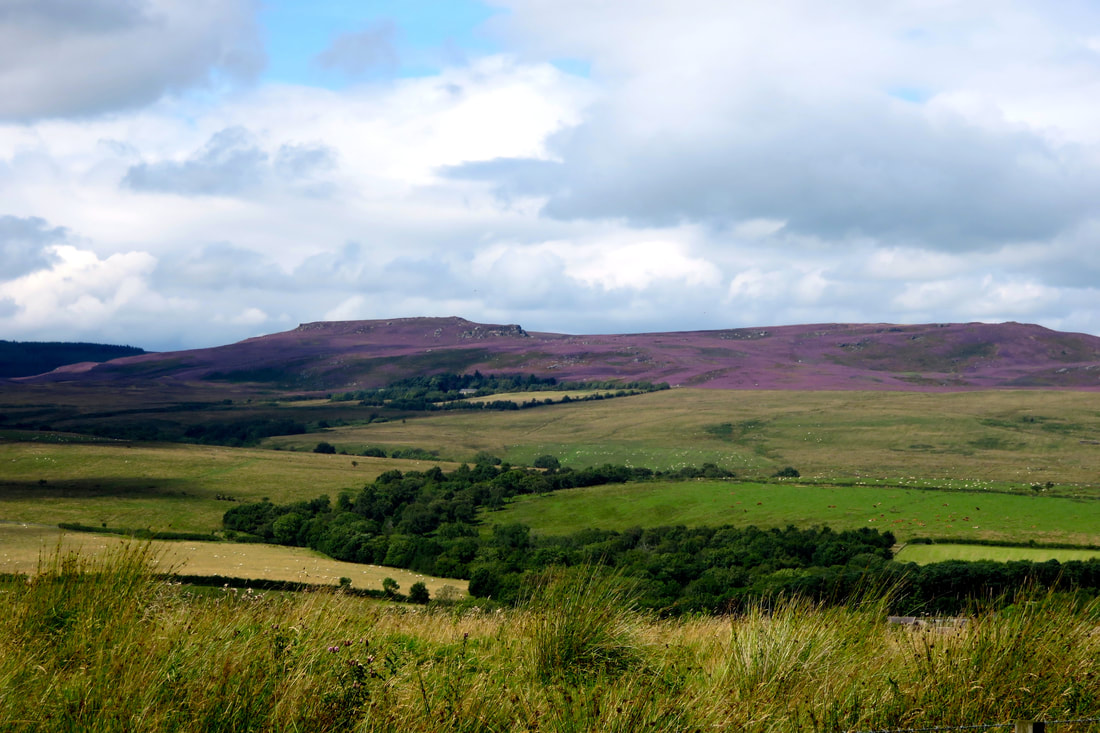 Fields with purple hills in the background
