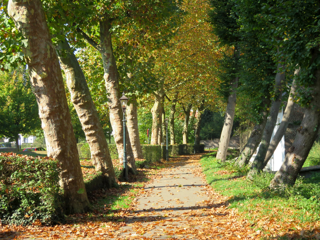 path lined with autumnal trees
