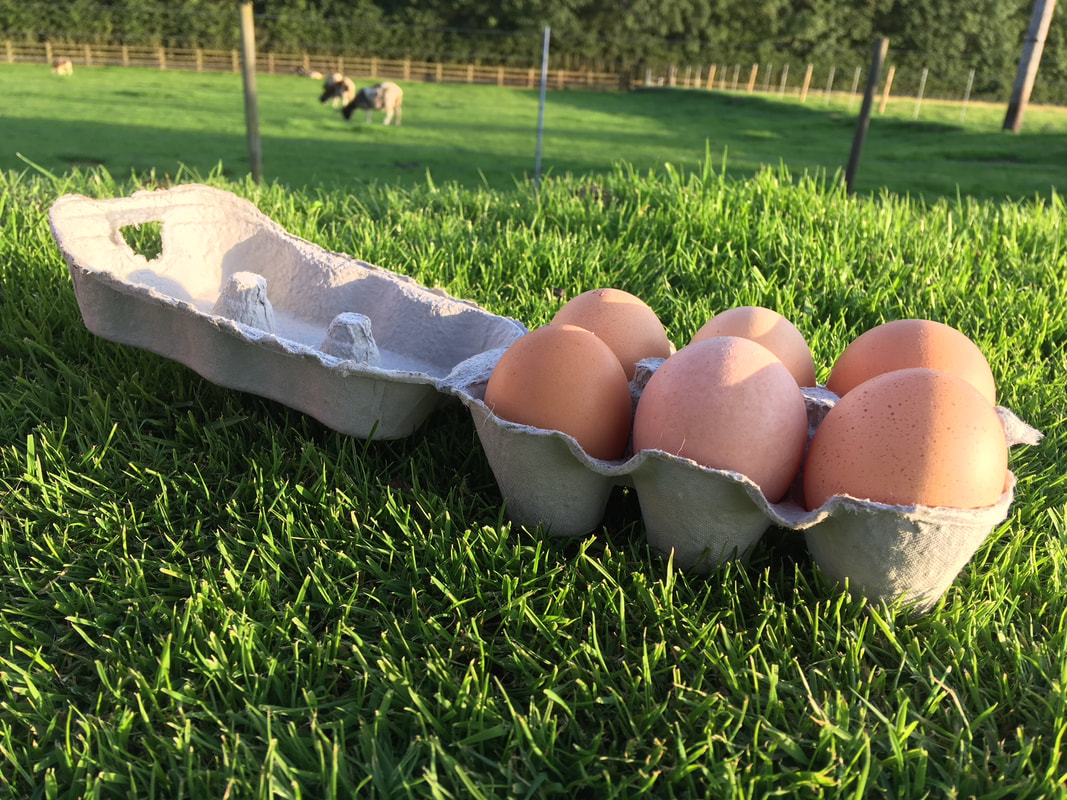 6 eggs in a carton