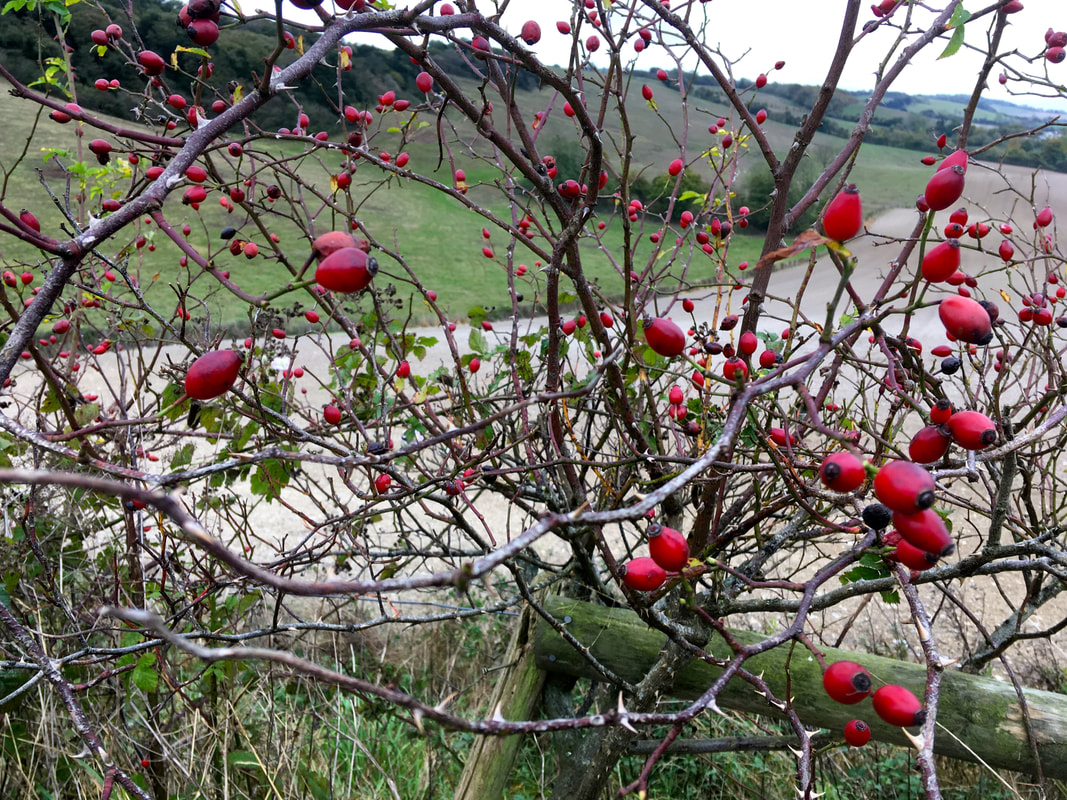 Rosehips and hills beyond