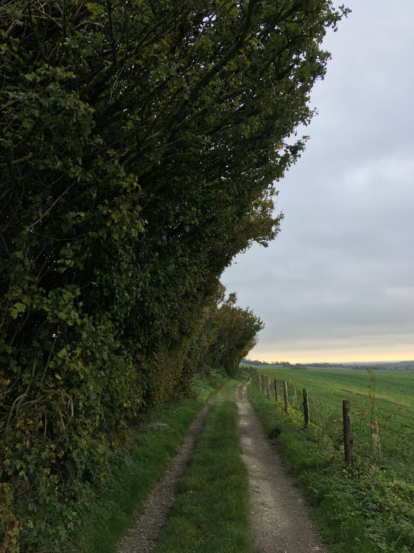 path, trees, fields