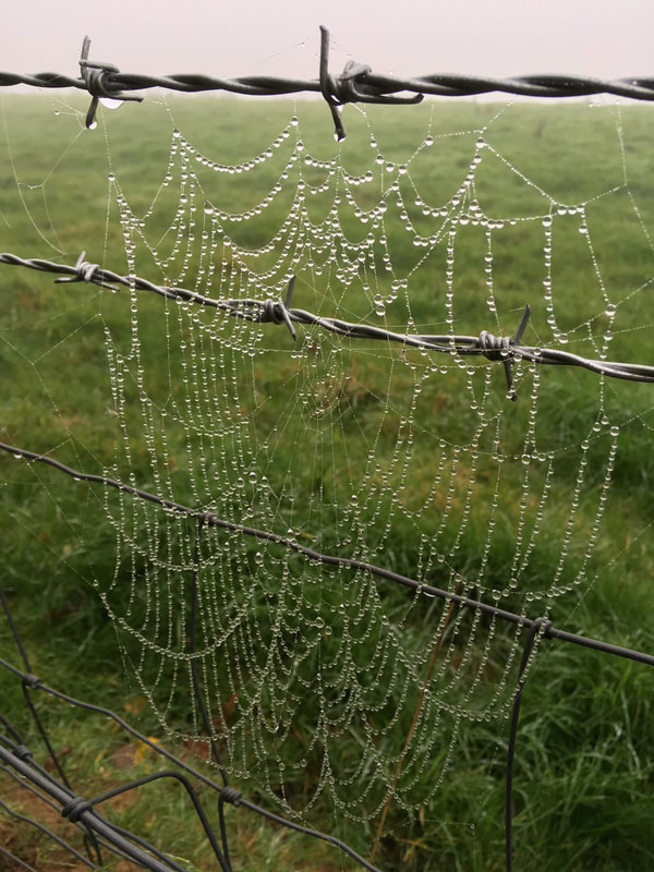 Spiderweb covered in water droplets