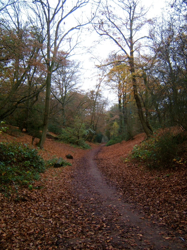 Autumnal path through woods
