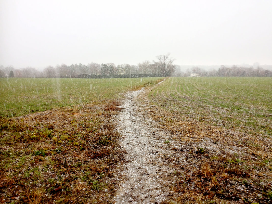 Field with snow falling